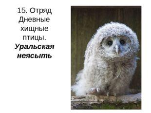 15. Отряд Дневные хищные птицы. Уральская неясыть