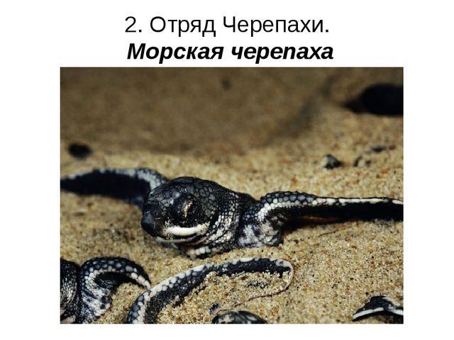 2. Отряд Черепахи. Морская черепаха