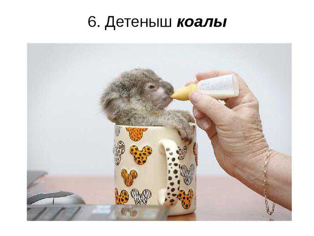 6. Детеныш коалы