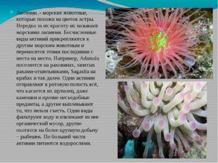 Актинии - морские животные, которые похожи на цветок астры. Нередко за их кра