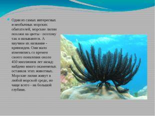 Одни из самых интересных и необычных морских обитателей, морские лилии похожи