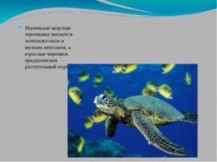 Маленькие морские черепашки питаются зоопланктоном и мелким нектоном, а взрос