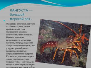 ЛАНГУСТА — большой морской рак . Основным отличием лангуста от обычного рака,
