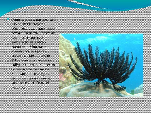 Одни из самых интересных и необычных морских обитателей, морские лилии похожи...