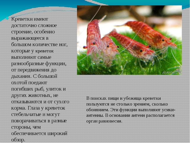 Креветки имеют достаточно сложное строение, особенно выражающееся в большом к...