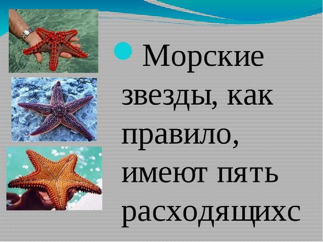Морские звезды, как правило, имеют пять расходящихся от центра рук-лучей - н...