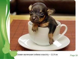 Самая маленькая собака в высоту – 11,9 см Free Powerpoint Templates Page *
