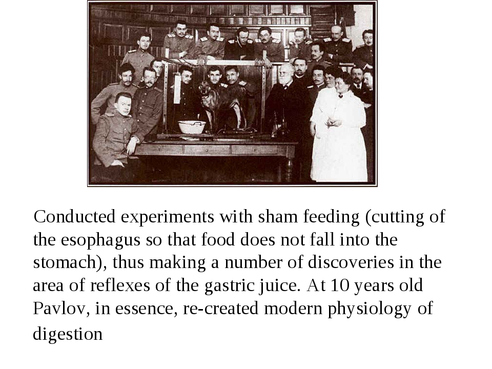 Conducted experiments with sham feeding (cutting of the esophagus so that fo...