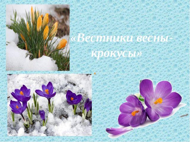 «Вестники весны- крокусы»