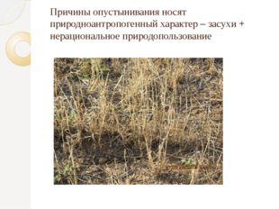 Причины опустынивания носят природноантропогенный характер – засухи + нерацио