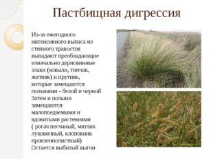 Пастбищная дигрессия Из-за ежегодного интенсивного выпаса из степного травост