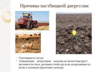Причины пастбищной дигрессии: Участившиеся засухи Повышенная антрогенная нагр