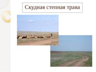 Скудная степная трава