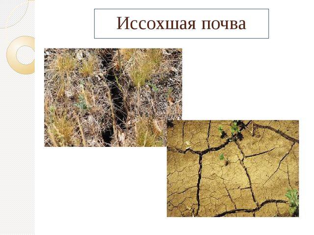 Иссохшая почва