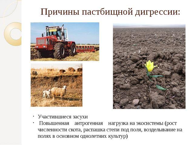 Причины пастбищной дигрессии: Участившиеся засухи Повышенная антрогенная нагр...