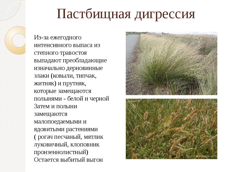 Пастбищная дигрессия Из-за ежегодного интенсивного выпаса из степного травост...