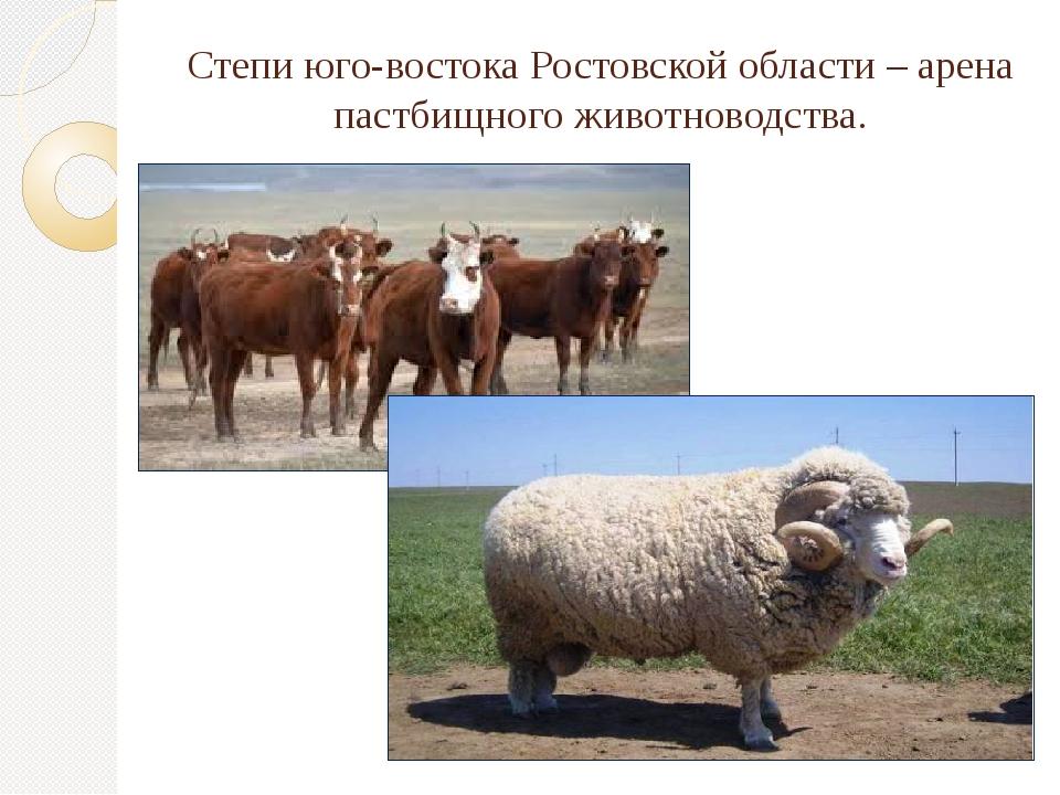 Степи юго-востока Ростовской области – арена пастбищного животноводства.