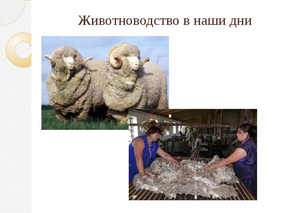 Животноводство в наши дни