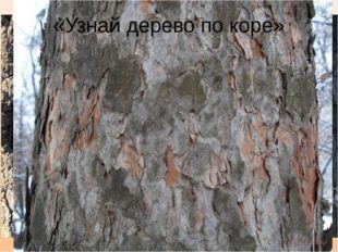«Узнай дерево по коре»