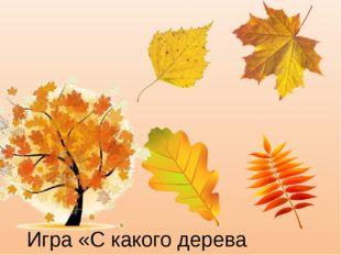 Игра «С какого дерева листок»