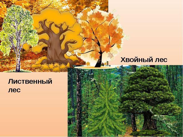 Лиственный лес Хвойный лес