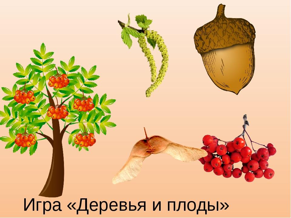 Игра «Деревья и плоды»