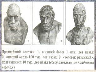 ОБЪЕМ МОЗГА: Человекообразная обезьяна – 300- 600 см куб. Австралопитек – 600