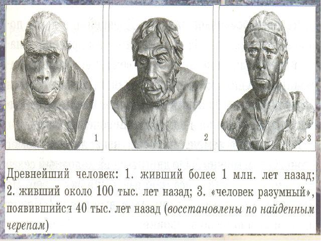 ОБЪЕМ МОЗГА: Человекообразная обезьяна – 300- 600 см куб. Австралопитек – 600...