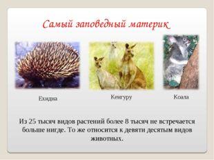 Самый заповедный материк Ехидна Кенгуру Из 25 тысяч видов растений более 8 ты