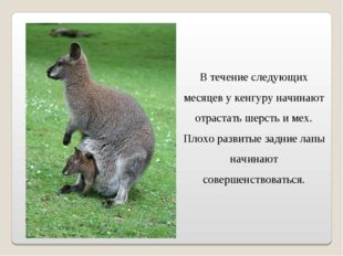 В течение следующих месяцев у кенгуру начинают отрастать шерсть и мех. Плохо