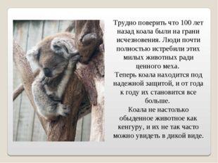 Трудно поверить что 100 лет назад коала были на грани исчезновения. Люди почт