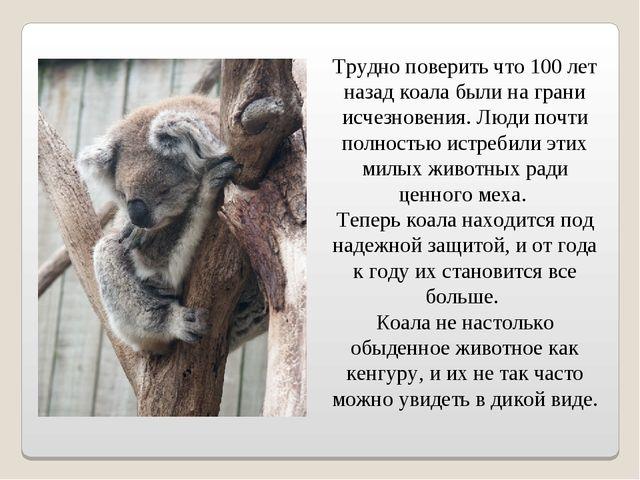 Трудно поверить что 100 лет назад коала были на грани исчезновения. Люди почт...