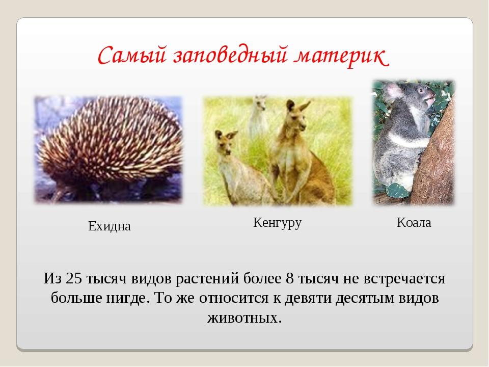 Самый заповедный материк Ехидна Кенгуру Из 25 тысяч видов растений более 8 ты...