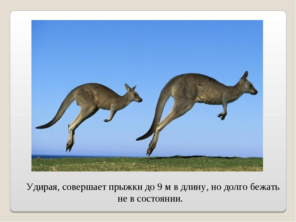 Удирая, совершает прыжки до 9 м в длину, но долго бежать не в состоянии.