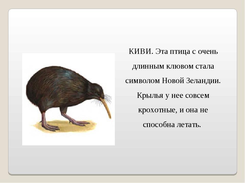 КИВИ. Эта птица с очень длинным клювом стала символом Новой Зеландии. Крылья...
