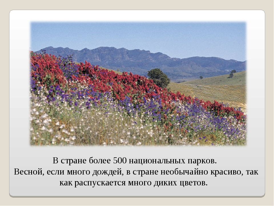 В стране более 500 национальных парков. Весной, если много дождей, в стране н...