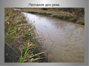 Песчаное дно реки.