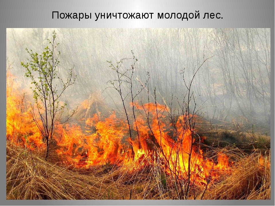 Пожары уничтожают молодой лес.
