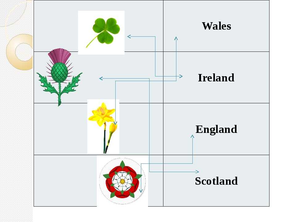 The daffodil is a symbol of… Wales