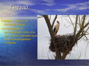 Гнездо. Гнездо— место, в которомптицы откладывают и высиживают свои, а в н
