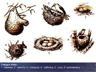 Гнёзда птиц: 1 - ремеза, 2 - иволги, 3 - козодоя, 4 - зяблика, 5 - утки, 6 -к