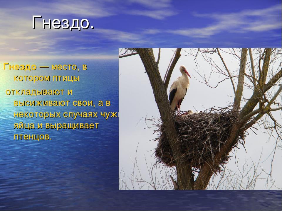 Гнездо. Гнездо— место, в которомптицы откладывают и высиживают свои, а в н...