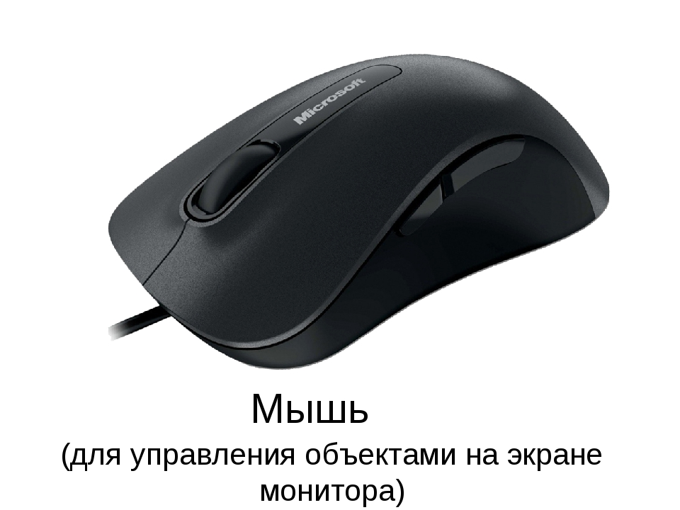 Мышь (для управления объектами на экране монитора)