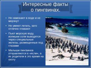 Интересные факты о пингвинах. Не намокают в воде и не мерзнут Не умеют лета