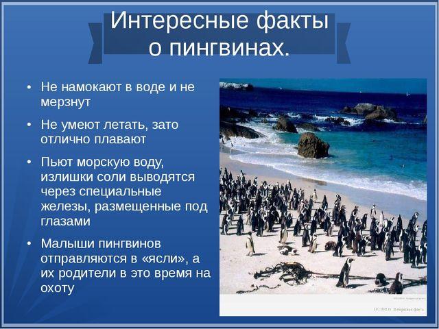 Интересные факты о пингвинах. Не намокают в воде и не мерзнут Не умеют лета...