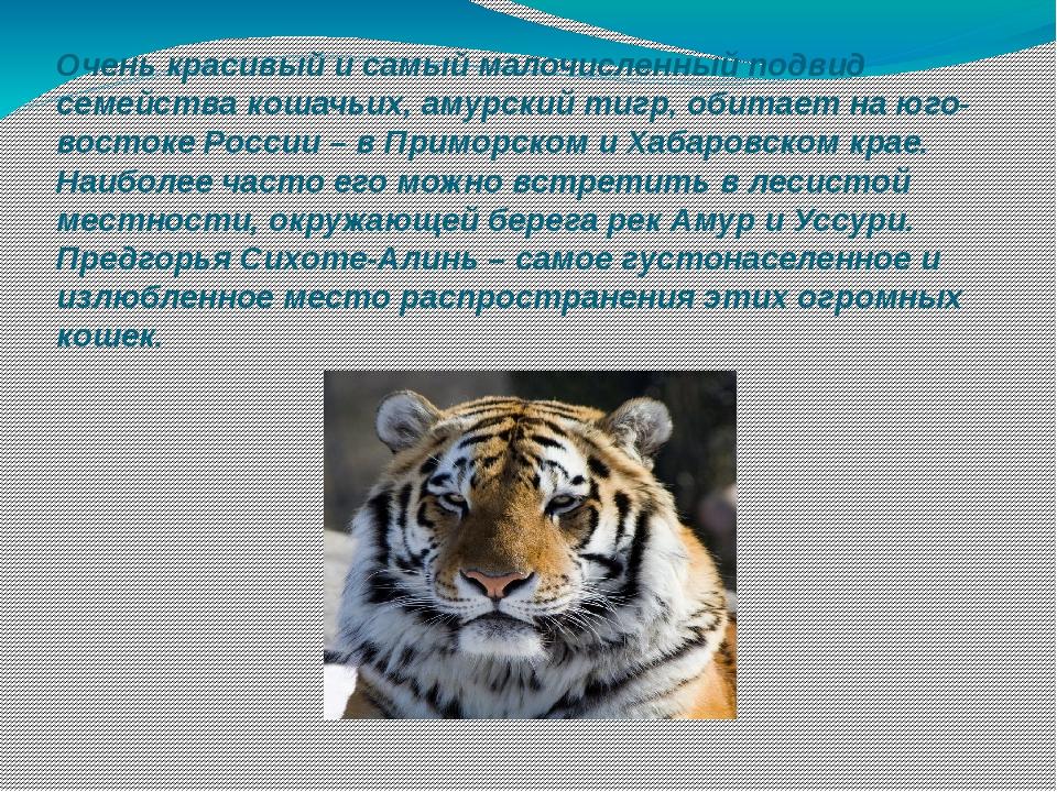 это амурский тигр стихи лучший курорт подмосковья
