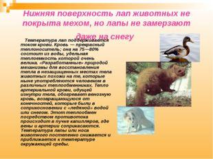 Нижняя поверхность лап животных не покрыта мехом, но лапы не замерзают даже н