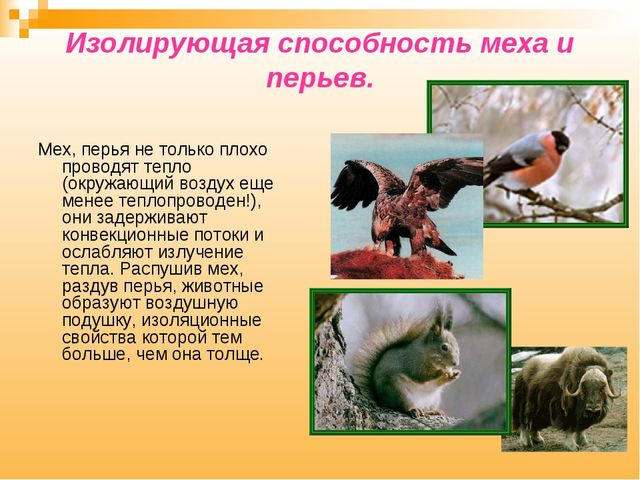 Изолирующая способность меха и перьев. Мех, перья не только плохо проводят те...