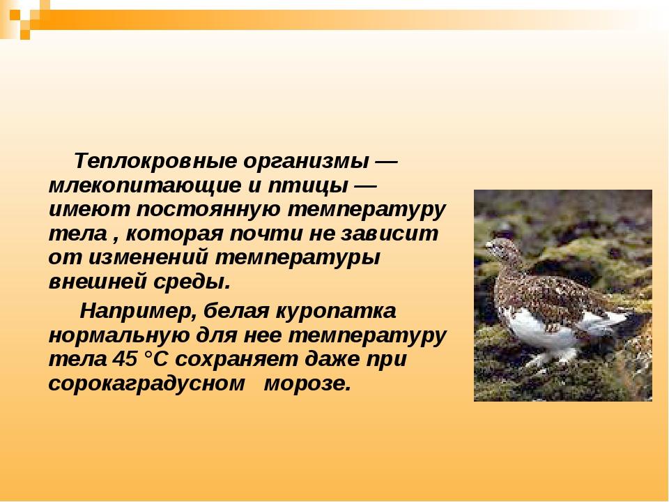 Теплокровные организмы — млекопитающие и птицы — имеют постоянную температур...