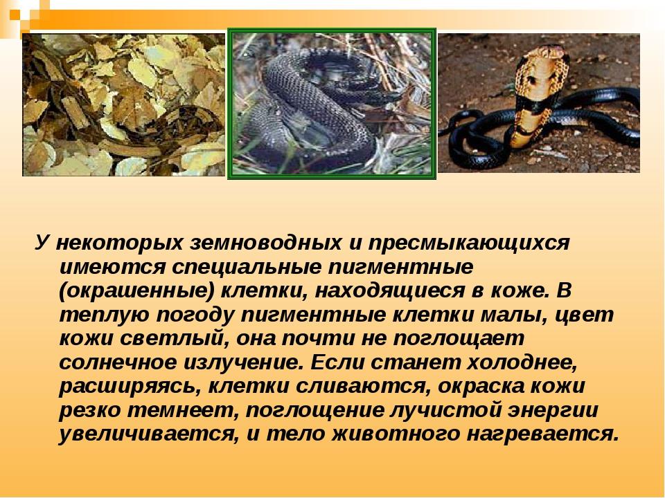 У некоторых земноводных и пресмыкающихся имеются специальные пигментные (окра...